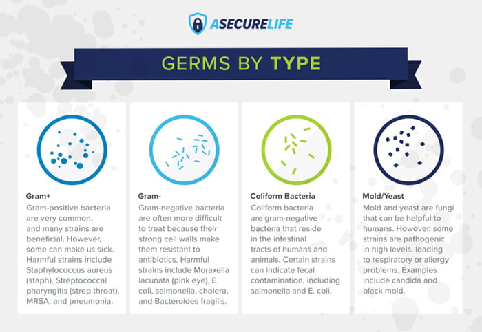 germs by type
