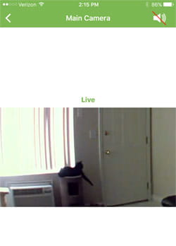 blink camera live view