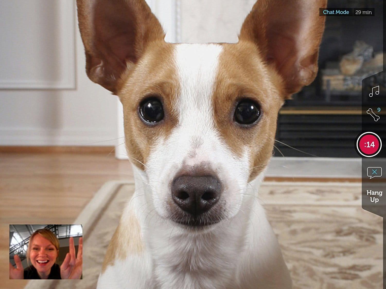 best pet camera