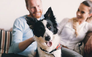 dog on couch with couple